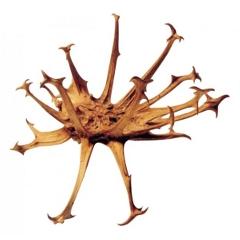 huile anti douleur et de massage l 39 harpagophytum bio ecocert label racines harpago contre. Black Bedroom Furniture Sets. Home Design Ideas